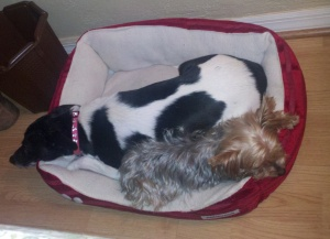 Gracie & Sophie share a bed 1.31.14